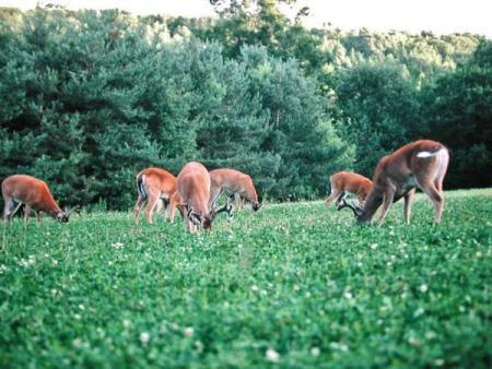 Food Plots And Deer Attractants
